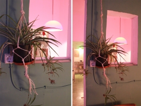Minimal macrame, or how to hang a pot plant in 5minutes