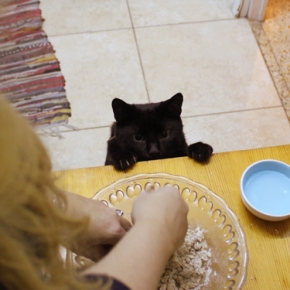 Cooking with Cat