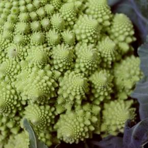 Romanesco broccoli & cheesepasta