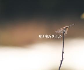 Creeping Beetles- A musicalinterlude