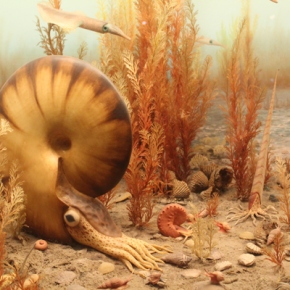 American Natural HistoryMuseum